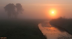 foggy sunrise (2) (HansHolt) Tags: trees sun mist reflection water fog sunrise bomen ngc npc reflexions z