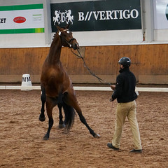 ratsuori8 (Natja K.) Tags: horse breeding stallion