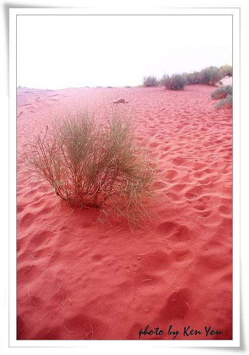 o1023628255_day3_2_WADI RUM粉紅沙漠_16