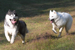 """Zarro & Chase In Action • <a style=""""font-size:0.8em;"""" href=""""http://www.flickr.com/photos/96196263@N07/10522630335/"""" target=""""_blank"""">View on Flickr</a>"""