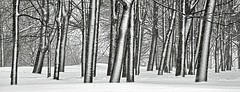 Snowfall_new (Pavel K) Tags: wood winter snow forest russia moscow snowfall kolomenskoye nikond7000 photographyforrecreation rememberthatmomentlevel1