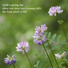 Flowers and Haiku (Don Iannone) Tags: flowers poetry haiku wildflowers imagepoetry