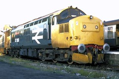 84 097 250784 Inverness 37260 (The KDH archive) Tags: railway 1984 inverness class37 37260 d6960