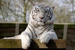 Ouwehand Dierenpark (Arnold van Wijk) Tags: netherlands animal zoo nederland fujinon rhenen dierentuin xf 55200 ouwehand fujixt1