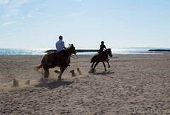 Manes in the wind (Lalykse) Tags: blue sea horse mer beach animals cheval sand mediterranean south sable bluesky running run course bleu provence animaux plage sud gallop chevaux mditerrane vias nikond3200 courir galop grandebleue evallepin
