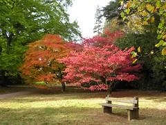 Westernbirt - HBM (sueeverettuk) Tags: autumn trees grass bench gloucestershire hbm autumncolour olympusdigitalcamera sueeverett westerbirt