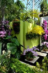 Form and Color (Eddie C3) Tags: newyorkcity flowers art design orchids bronx nybg orchidshow landscapearchitecture newyorkbotanicalgarden enidahauptconservatory keywestcontemporary