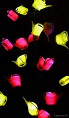(LuposAter) Tags: licht fly im frankfurt pot palmengarten lichter watering fliegen wateringpot dunkeln giesenkannen