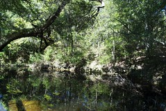 DSC_0840 (ohhAlayna) Tags: green florida sinkholes