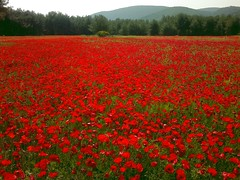 One or two poppies (A-Martin-H) Tags: greece poppy k2 lesvos lesbos landskap