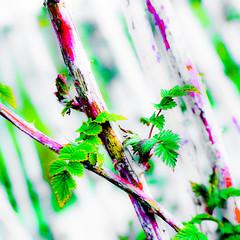 Green On II (wide-angle.de) Tags: trees digital germany de top500 y201408trees y201408