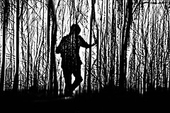 slowly disappearing into the light.... (LotusMoon Photography) Tags: photomanipulation photomontage bw blacknwhite blackandwhite monochrome landscape forest texture serene surreal outdoor trees tree plant abstract abstraction