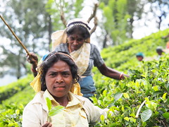 Tea pickers trying to show me the leafes!