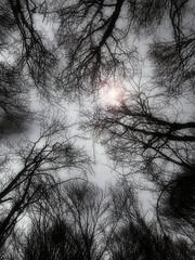 morning light sky bw sun mountain ski tree fog soft... (Photo: AlberBarrera on Flickr)