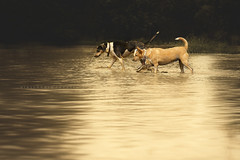 Little explorers (alessandrafavetto) Tags: dog pet pets color dogs water horizontal puddle outdoors outdoor dogphotography petphotography dogportrait petphotographer dogphotographer