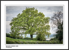A Good Spread (Chalky666) Tags: trees painterly tree water leaves landscape oak rutland
