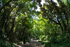 forest (tk21hx) Tags: japan tokyo fisheye shirokane sigma15mmf28exdgdiagonalfisheye
