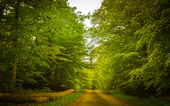 Outdoor-6220 (EbE_inspiration) Tags: wood trees tree green woods outdoor path