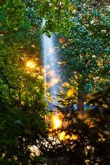 Der Schutzteich - ein mystischer Nyphentmpel (Rico Hentschel) Tags: sonnenuntergang grn teich bltter erzgebirge fontne annabergbuchholz blattwerk schutzteich