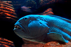 Underwater sea creatures and other animals Wallpapers | SEA LIFE Adventure Backgrounds - Part 11 (PhotographyPLUS) Tags: pictures graphics photos illustrations images stockphotos articles footage stockimage freephoto stockphotograph