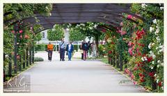 Rosarium Baden bei Wien, rosenpergola   2014-06 (Brigitte Rieser) Tags: park rose austria jardin rosa parc rosegarden niedersterreich rosengarten pergola badenbeiwien rosenbogen rosarium roseraie rosenpark doblhoffpark naturimgarten