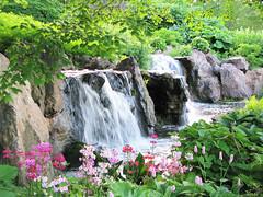 Waterfall Garden (Cher12861) Tags: landscape rocks waterfalls greenery springflowers chicagobotanicgarden glencoeillinois spring2016