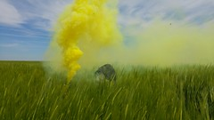 Smoke in the field (Marijana Vasic) Tags: street sky urban nature colors field clouds photography photo amazing cool view smoke bombs