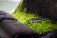 Green Path (Kindallas) Tags: