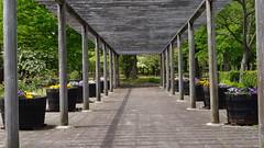 Perspective (Vic's pix original) Tags: wood flowers trees lines garden patterns pots