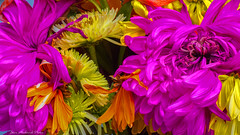 Explosion of Color_14595 (smack53) Tags: flowers plants macro floral closeup canon spring colorful powershot pottedplants springtime g12 canonpowershotg12 smack53