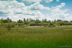 """""""8/365: perdidos"""" (Josune Martin) Tags: naturaleza verde planta relax paisaje cielo campo hierba airelibre serenidad salburua"""