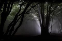 Speranze_nel_nulla (Danilo Mazzanti) Tags: photography foto photos flash fotografia nebbia albero fotografo danilo bosco composizione mazzanti fiaba faiallo strobist danilomazzanti wwwdanilomazzantiit
