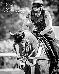 Dot Matrix (EASY GOER) Tags: park horses horse sports belmont racing races thoroughbred equine