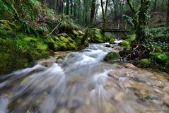 Rego da Fraga (f@gra) Tags: wood trees tree rio river landscape spain arboles sony silk paisaje galicia bosque seda fraga rego efectoseda silkeffect