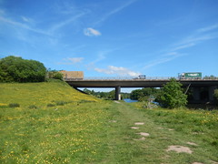 A55 bridge and the Marches Way, 2016 May 31 (Dunnock_D) Tags: road uk bridge blue trees england sky white green grass clouds unitedkingdom britain buttercups a55 northwalesexpressway