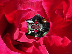 Rozig (Omroep Zeeland) Tags: ros schouwenduiveland padmos