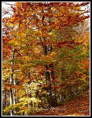 Couleurs. (armandbrignoli) Tags: arbre plante tree couleur feuillage nature