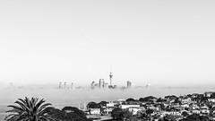 Candy Floss (duncan_mclean) Tags: city blackandwhite bw monochrome mono cityscape auckland skytower cbd northhead devonport aucklandcity