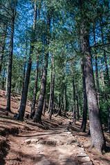 KedarKantha_003 (SaurabhChatterjee) Tags: trek hiking uttaranchal dehradun kedar kedarkantha uttarakhand sankri kedarkanthatrek saurabhchatterjee siaphotographyin trekkinginuttrakhand
