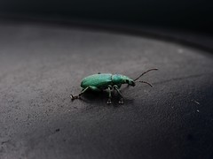 kiel_praktikum2016c (ghoermann) Tags: deu geo:lat=5470920167 geo:lon=949620008 geotagged germany grossolt mhlenbrck schleswigholstein bug insect animal