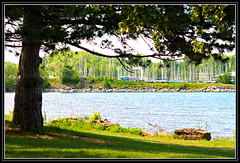 Boats In The Distance (bigbrowneyez) Tags: trees light canada nature water beautiful leaves alberi marina boats shadows dof bright branches details sunny natura frame lovely joyful tranquil luce ottawariver fume delightful cornice andrewhaydenpark acua boatsinthedistance