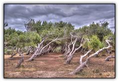 Inclinaison (au35) Tags: tree corse couleurs ciel arbres nuages ajaccio hdr