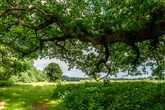 Trees (Ulrich J) Tags: trees landscape denmark trer danmark landskab borup