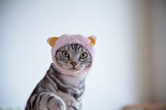 DSC_5535 (catfish.boogie) Tags: japan cat sapporo hokkaido nikkor24120mmf4gedvr nikond750