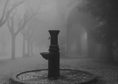 _DSC3678 (Giuseppe Cocchieri) Tags: blackandwhite bw white mist black blackwhite nikon atmosphere frog nikkor nebbia bianco atmosfera nero bianconero biancoenero