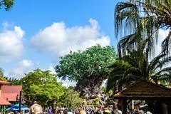 Tree of Life (kristianhowells) Tags: orlando florida disney disneyworld wdw animalkingdom treeoflife