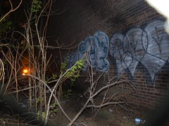 roe cooe (General Butt-Naked) Tags: rsu roe gtp acb cooe