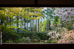 Hosenin Temple, Kyoto, Japan, ,  (Akiko Morita) Tags: travel light holiday inspiration plant flower history love nature japan architecture garden cherry landscape temple photography japanese photo spring kyoto image gardening vibrant joy picture jardin historic momiji serenity    romantic meditation  inspirational  horticulture  japon     sensation                         hosenin