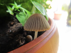 Mushrooms (Amelia Peabody Emerson) Tags: macro nature mushrooms natura funghi