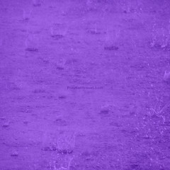Purple Rain (IMJPRO) Tags: music abstract color art nature water rain outside outdoors photography marketing photo blog lyrics drops promo interesting nikon thought play purple graphic image song contemporary web perspective picture thoughtful lifestyle pop minimal creation filter website online abstraction create concept tune purpose impression meaning interpretation lyric promote imj abstractness playeattravelcom imjproductions